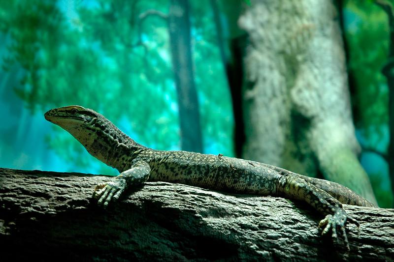 Lizard in Boston, MA, USA.