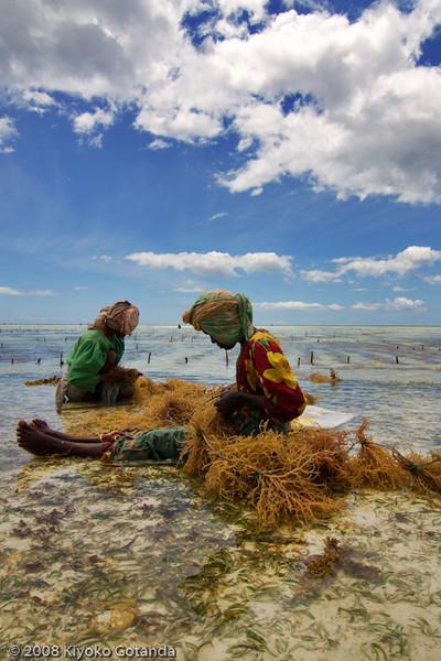 Seaweed farmers in Zanzibar, Tanzania