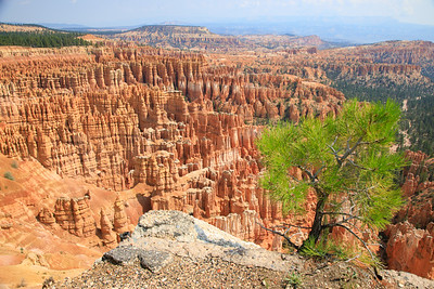 Tree color, Inspiration point, Bryce Canyon National Park, Utah - 8100 feet