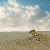 Serengeti Sentries