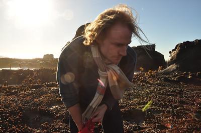 Gathering mussels at Half Moon Bay, CA