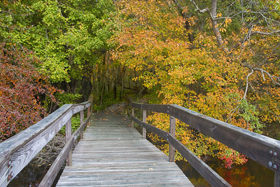 BRIDGE TO COLOR - DANIEL WEBSTER SANCTUARY (2007)