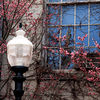 <center>REFLECTIONS OF SPRING - QUINCY, MA <i>(2006)</i></center>