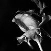 IMG#1078<br /> Midnight Faerie