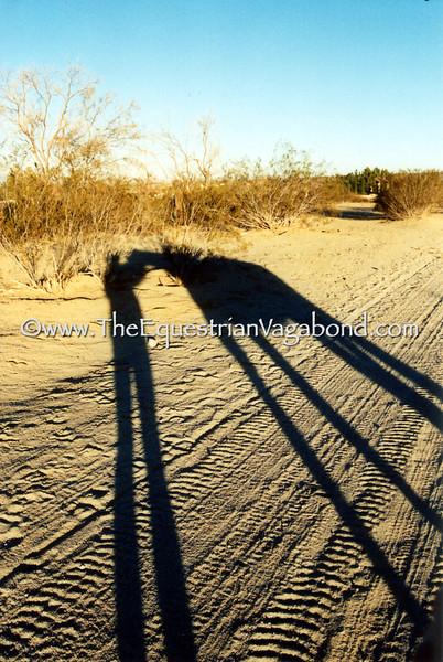 Long Shadows I