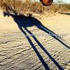 Long Shadows III