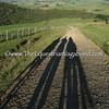Kiwi Shadows