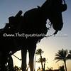 Carriage Horse I