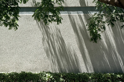 Shadows of trees on wall in Fremont