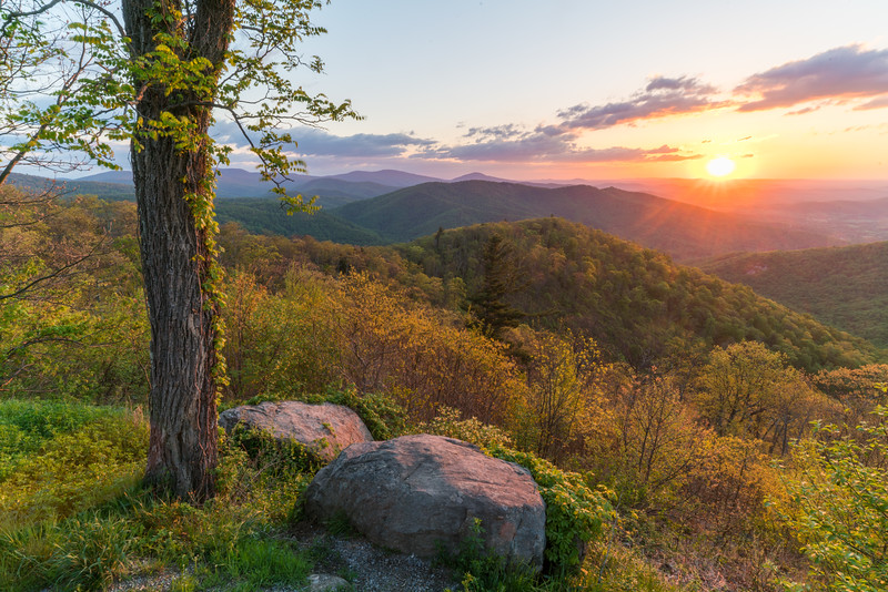 Shenandoah Spring || Buck Hollow Overlook, SNP, VA