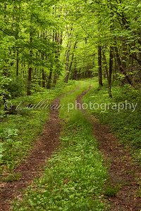 Trail though lush green forest on Loft Mountain