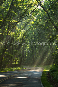 Sunlight filters through the trees along Skyline Drive in Shenandoah National Park.