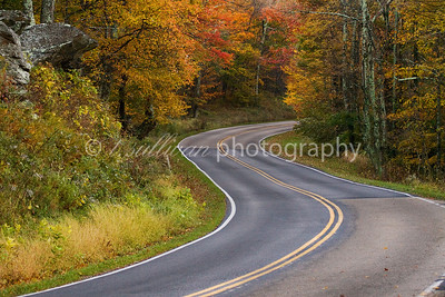 Fall foliage lines an s-curve in the road on Skyline Drive in Shenandoah National Park