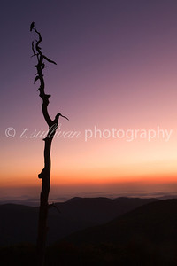 A lone bird rests upon a dead tree at Thorofare overlook in Shenandoah National Park.