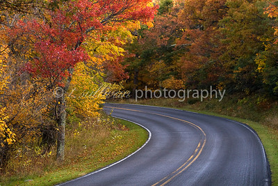 Fall foliage lines a curve on Skyline Drive in Shenandoah National Park