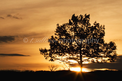 Sunrise behind a silhouetted tree at Big Meadows in Shenandoah National Park.