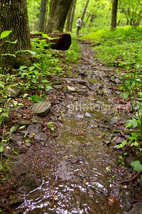 Wet trail on Loft Mountain