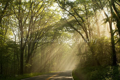 Sun rays burst through the trees on Skyline Drive in Shenandoah National Park