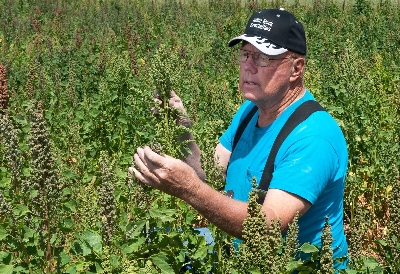 Quinoa grower Ernie New