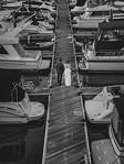 shoshana greg wed 93