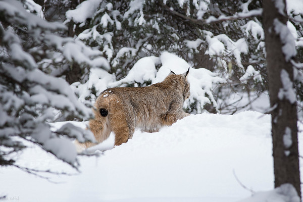 On a Mission - Canmore, Alberta