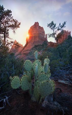 Prickly Pear - Sedona, Arizona