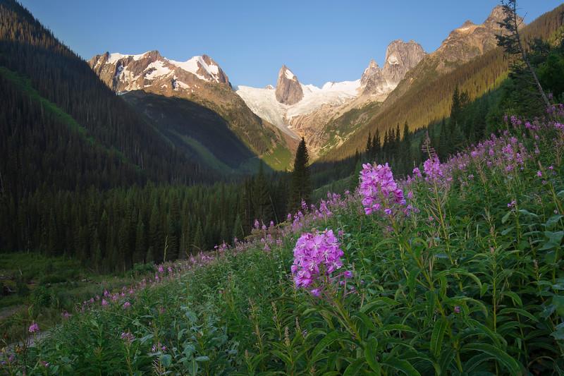 Spire-weed - Bugaboos Provincial Park, British Columbia