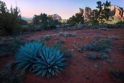 Standing Out - Sedona, Arizona