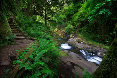 Path Through Paradise