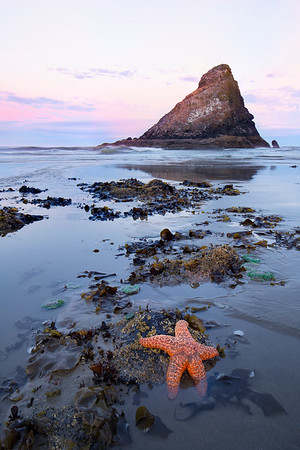 Star Struck - Heceta Beach, Oregon