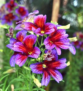 RoyalResidence_Flowers3