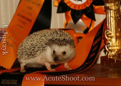 "Pyjama Yams. Our African Pygmy Hedgehog won ""Best of Show"" at Hedgehog Fest 2009."