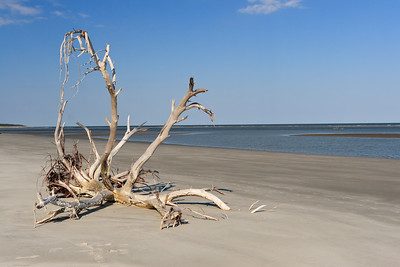 Sapelo Island January 2008