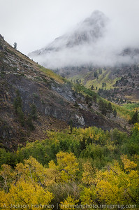 Misty mountain over fall aspens, McGee Creek Canyon, California, September 2014.
