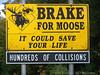 Brake For Moose, Kankamangas Hwy, NH