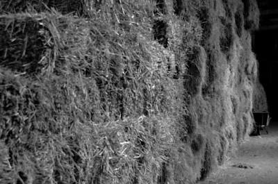 28/09: wheelbarrow