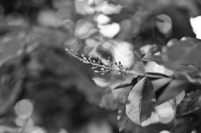23/09: twig