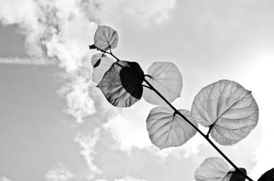 08/09: leaves