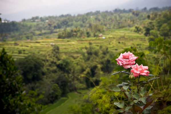 """<font color=#cccccc>More Bali shots <a href=""""http://www.whoalse.com/gallery/6525236_mfzyU#414815187_4sJR3"""">here</a>.</font>"""