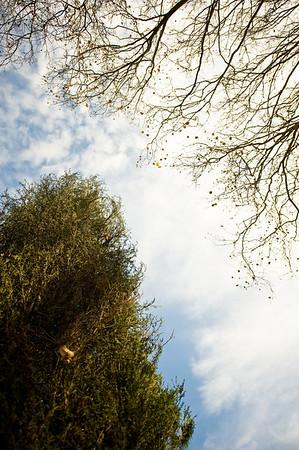 <font color=#cccccc>Resilient Pine</font>