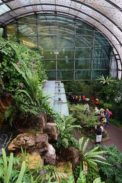 Butterfly Garden, Changi Airport - Singapore