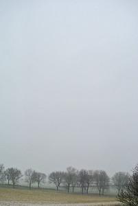 Day 7: mist