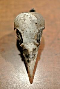 Day 25: bird skull