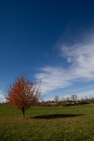 Lone tree at Bookmark Farms. Pataskala, Ohio