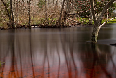 Great Egg Harbor River @ Weymouth Furnace-3
