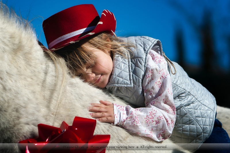The aged Arabian pony gets his own girl for Christmas.