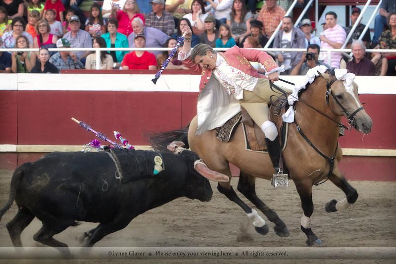 Bloodless bullfighting, California-style.  Quiver, Lusitano stallion.