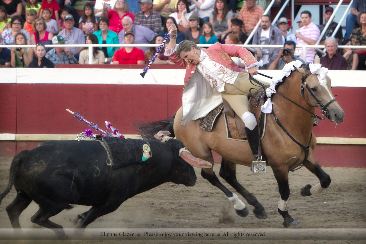 Bloodless bullfighting, California-style.  Quiver, Lusitano stallion.