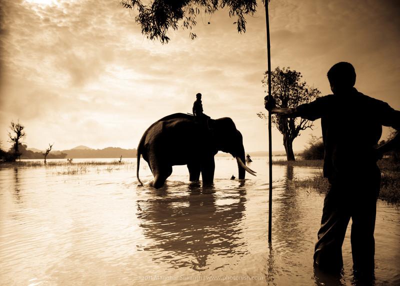 Elephant Bathing in South India.