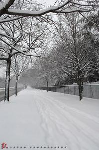 NYCsnow2008-02-22 copy